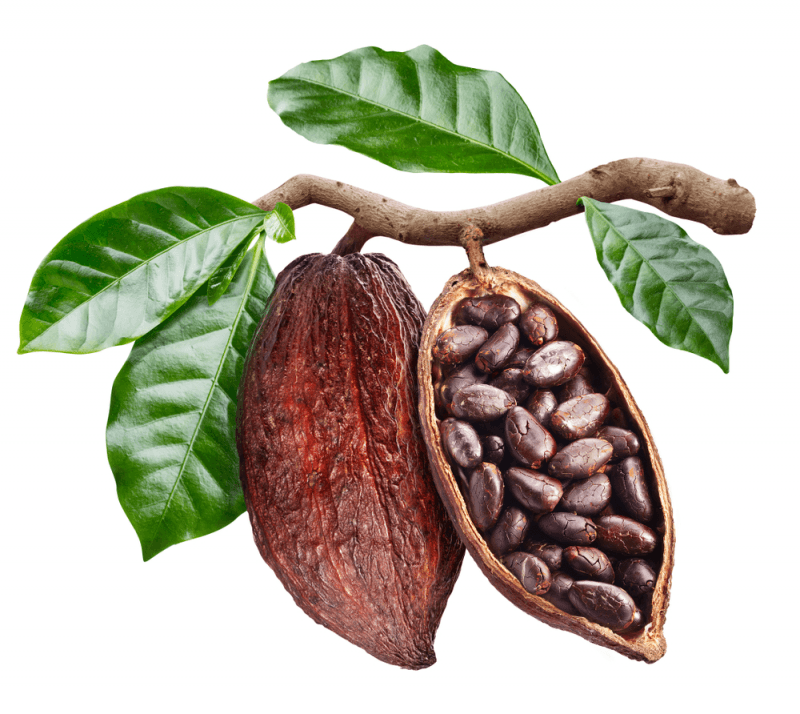 12 tác dụng tuyệt vời của trái ca cao đối với sức khỏe và làm đẹp
