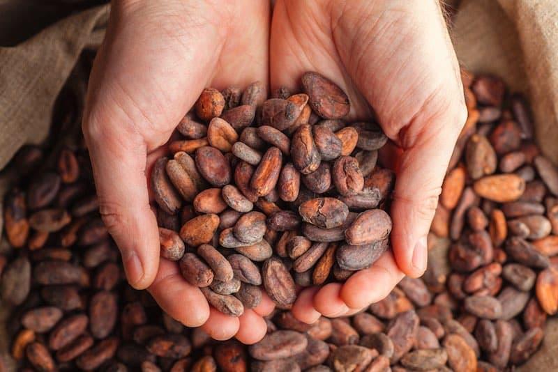 11 Lợi ích sức khỏe và giá trị dinh dưỡng của bột ca cao